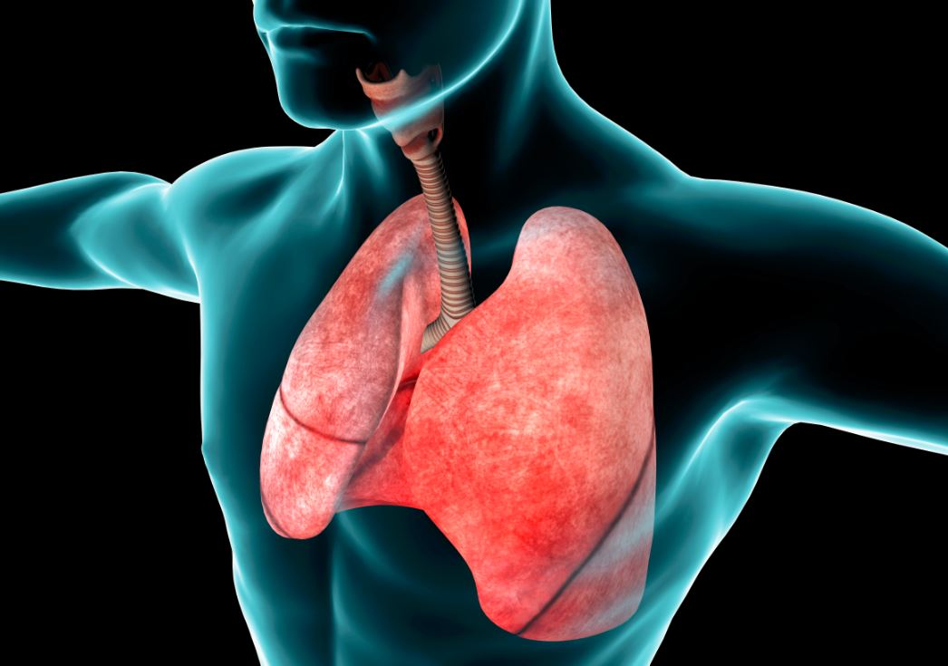 aging-of-respiratory-system